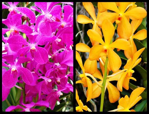 Singapore Botanical Gardens 2