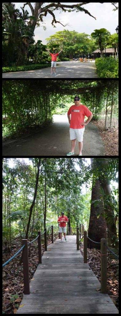 Singapore Botanical Gardens 4