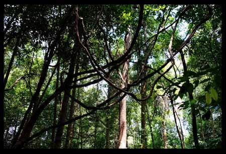 Singapore Botanical Gardens 5